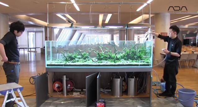 Новый аквариум Такаси Амано
